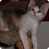 Adopt A Pet :: Molly - McHenry, IL