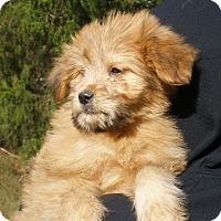 Adopt A Pet :: FRANCISCO - Chicago, IL