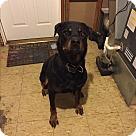 Adopt A Pet :: Thor (COURTESY POST)