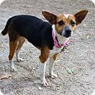 Adopt A Pet :: Pip
