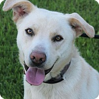 Adopt A Pet :: Sebastian - Red Bluff, CA