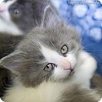 Adopt A Pet :: Morgan - Worcester, MA