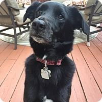 Adopt A Pet :: Finn - Lawrenceville, GA