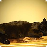 Adopt A Pet :: Salem - Island Park, NY