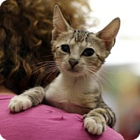 Adopt A Pet :: Quincy - New York, NY