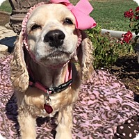 Adopt A Pet :: Jenni - Santa Barbara, CA
