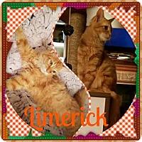 Adopt A Pet :: Limerick - Ennis, TX