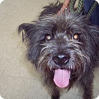 Adopt A Pet :: Gabe - Olivet, MI