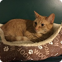 Adopt A Pet :: Taylor - Burlington, NC