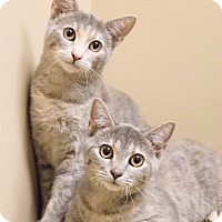 Adopt A Pet :: Gianna and Paloma - Chicago, IL