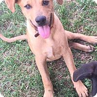 Adopt A Pet :: Dan - WAGONER, OK