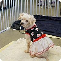 Adopt A Pet :: Aimee - Bealeton, VA