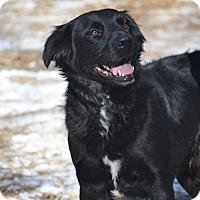 Adopt A Pet :: Jäger - Bedminster, NJ