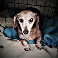 Adopt A Pet :: Java Juice - Pearland, TX