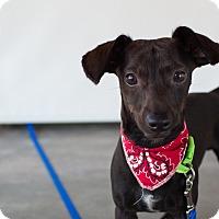 Adopt A Pet :: Willie - Nanaimo, BC