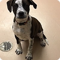 Adopt A Pet :: Emma - Battle Creek, MI