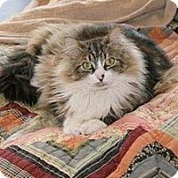 Adopt A Pet :: Fluffy - Fredericksburg, VA