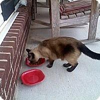Adopt A Pet :: *Simon - Winder, GA