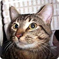 Adopt A Pet :: Elliott - Scottsdale, AZ