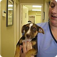Adopt A Pet :: Finn - Apex, NC