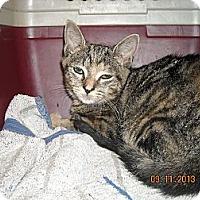 Adopt A Pet :: Mitzie - Riverside, RI