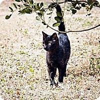 Adopt A Pet :: Sparky - San Antonio, TX