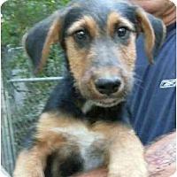 Adopt A Pet :: Sasquatch - Harrisburg, PA