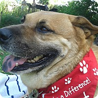 Adopt A Pet :: Coleman - Burbank, CA