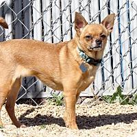 Adopt A Pet :: Maui - Meridian, ID