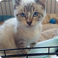 Adopt A Pet :: Fleur de Lis - Austin, TX