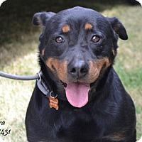 Adopt A Pet :: Nora - Conroe, TX