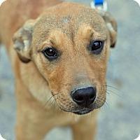 Adopt A Pet :: Marvin - Pleasant Plain, OH