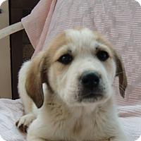 Adopt A Pet :: Elisa - Huntsville, AL
