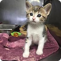 Adopt A Pet :: Magnolia - Pinckney, MI