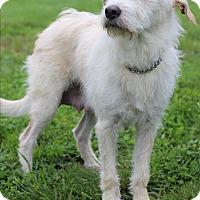 Adopt A Pet :: Dixie - Waldorf, MD