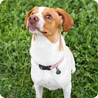 Adopt A Pet :: Ethel Mae - Summerville, SC