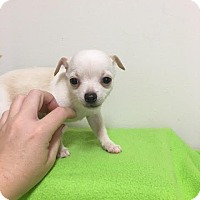 Adopt A Pet :: Gidget--ADOPTION PENDING - Baton Rouge, LA