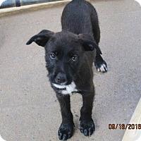 Adopt A Pet :: RINGO - Williston Park, NY