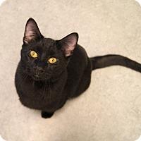 Adopt A Pet :: Sunset - Colorado Springs, CO