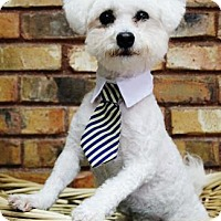 Adopt A Pet :: Biscuit - Benbrook, TX