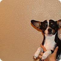 Adopt A Pet :: Rex - Oviedo, FL