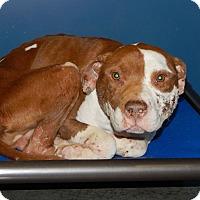 Adopt A Pet :: Cooper - Henderson, NC
