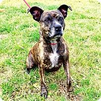 Adopt A Pet :: Nala - Lafayette, NJ