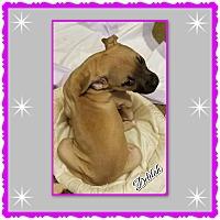 Adopt A Pet :: Delilah - Richmond, CA