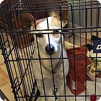 Adopt A Pet :: Pearl - Newport, KY