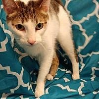 Adopt A Pet :: George - Baton Rouge, LA