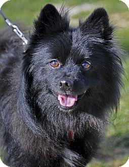 Jorgie Adopted Dog D 4350 Mt Prospect Il
