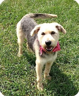 Leslie | Adopted Dog | Winchester, KY | Airedale Terrier Mix