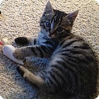 Adopt A Pet :: Harriet - Modesto, CA