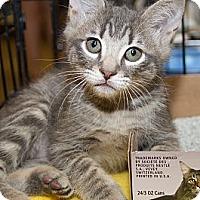 Adopt A Pet :: Jasper - Irvine, CA